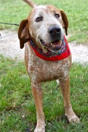 Good Dog Argos Doug Schlien Animal Rescue Animal Rescue Best Dogs Big Dogs