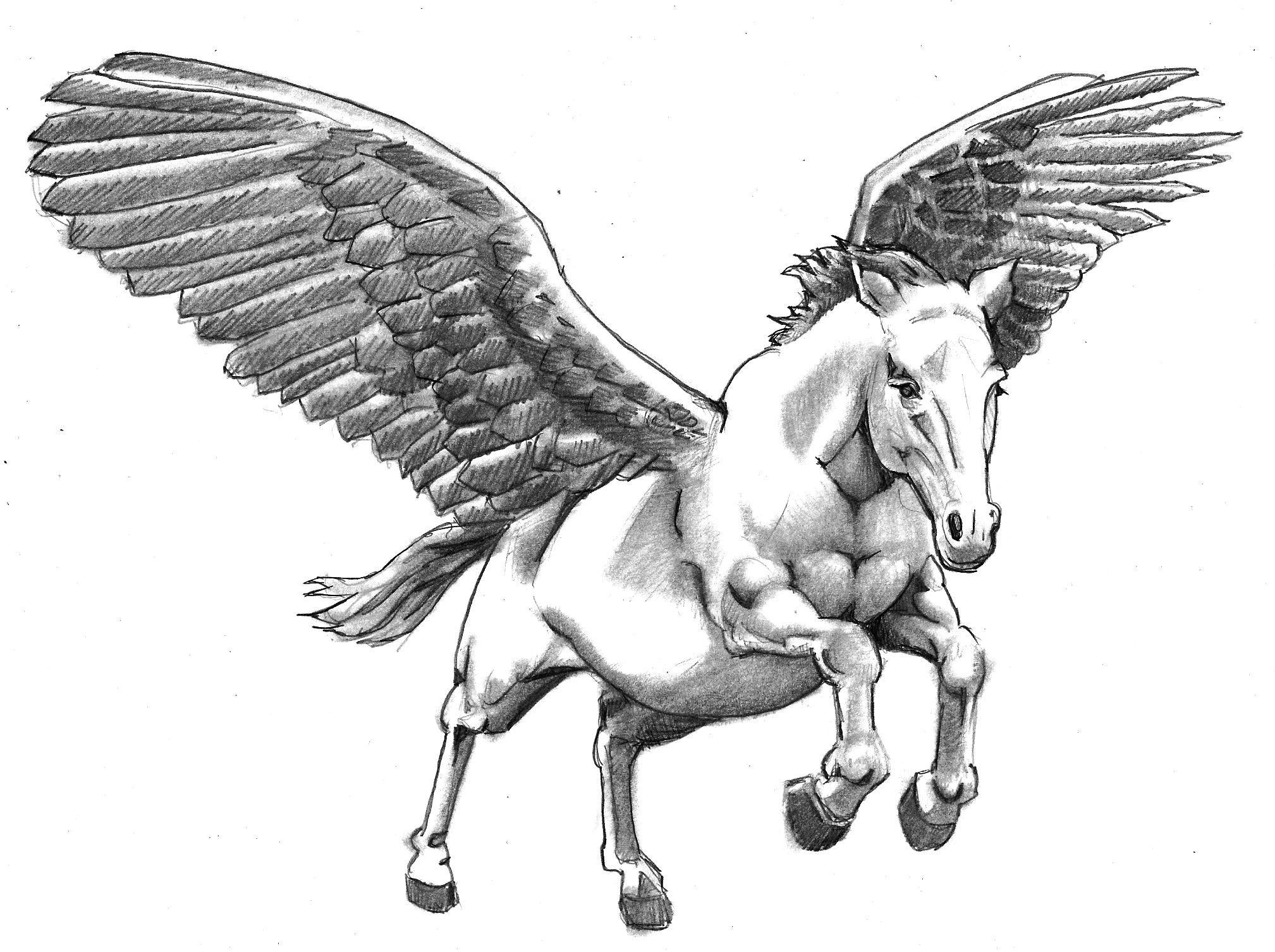 Uncategorized Drawings Of Pegasus amazing white pegasus tattoo design pinterest design
