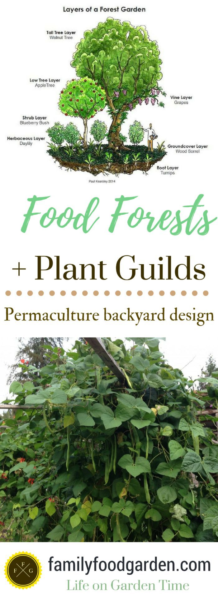 Food Forests & Plant Guilds in Permaculture Design