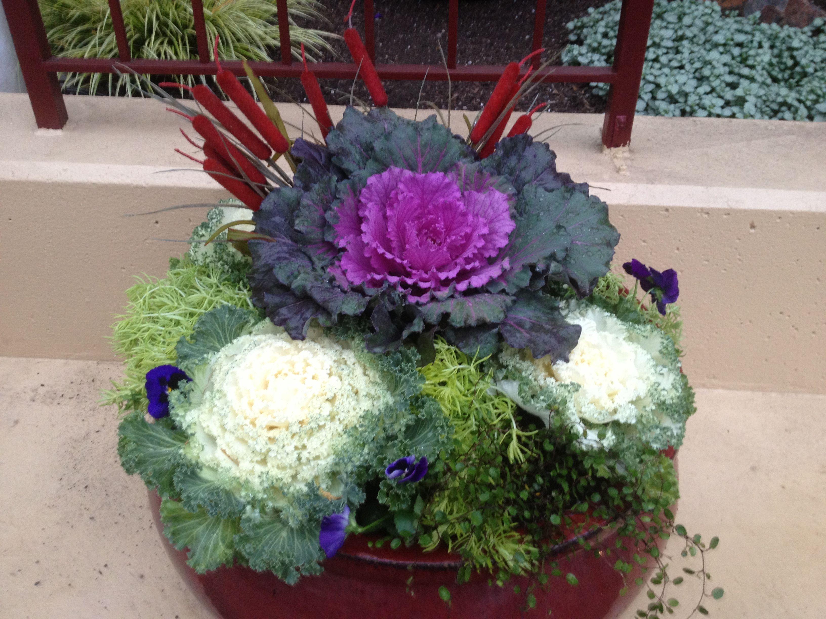 Winter Container Gardens By Estela Love These Pots Description