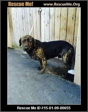 Laurel County Animal Shelter Animals Animal Rescue Animal Shelter