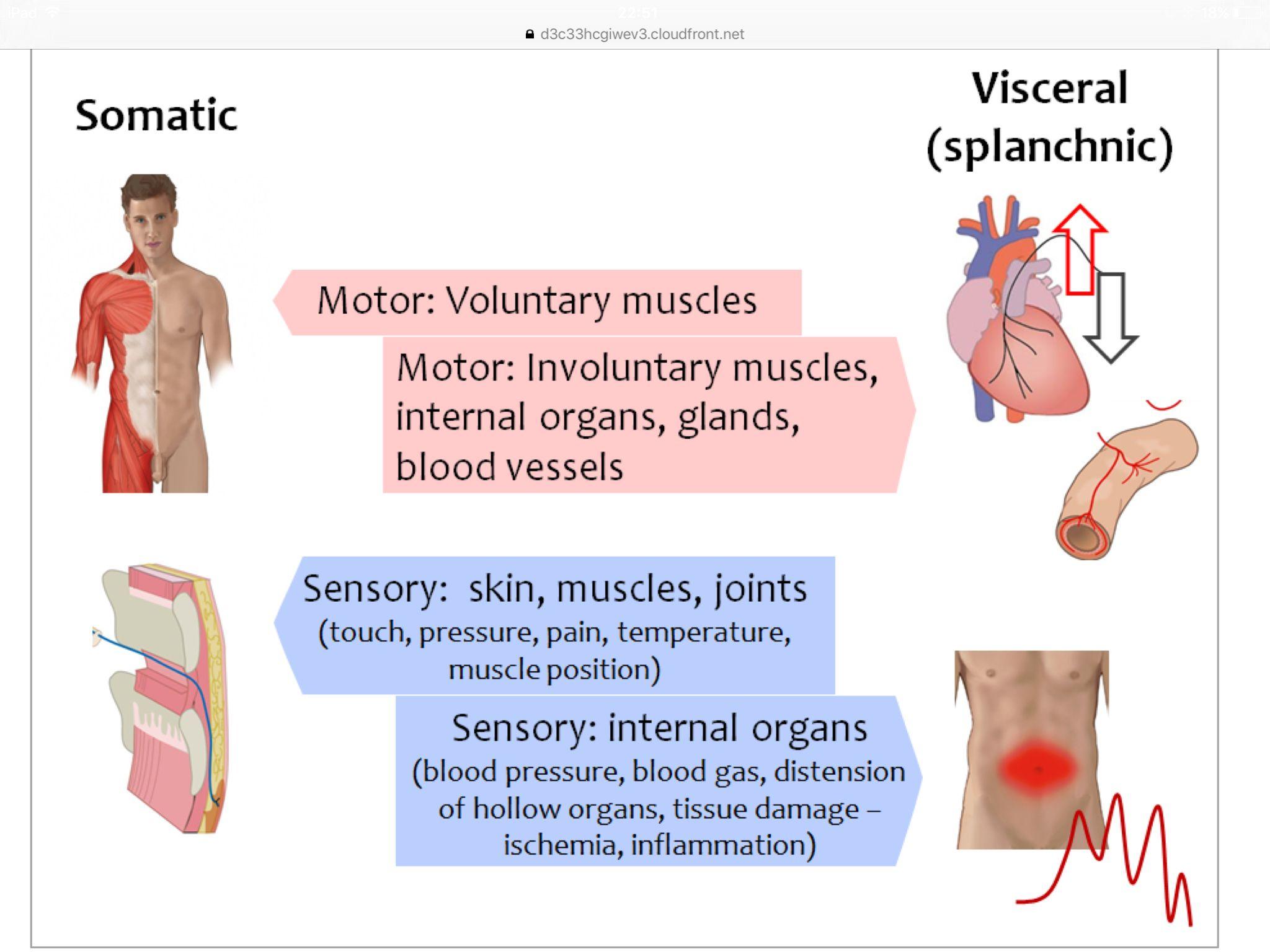 Human Anatomy 101 Nervous System Histologyanatomy Pinterest