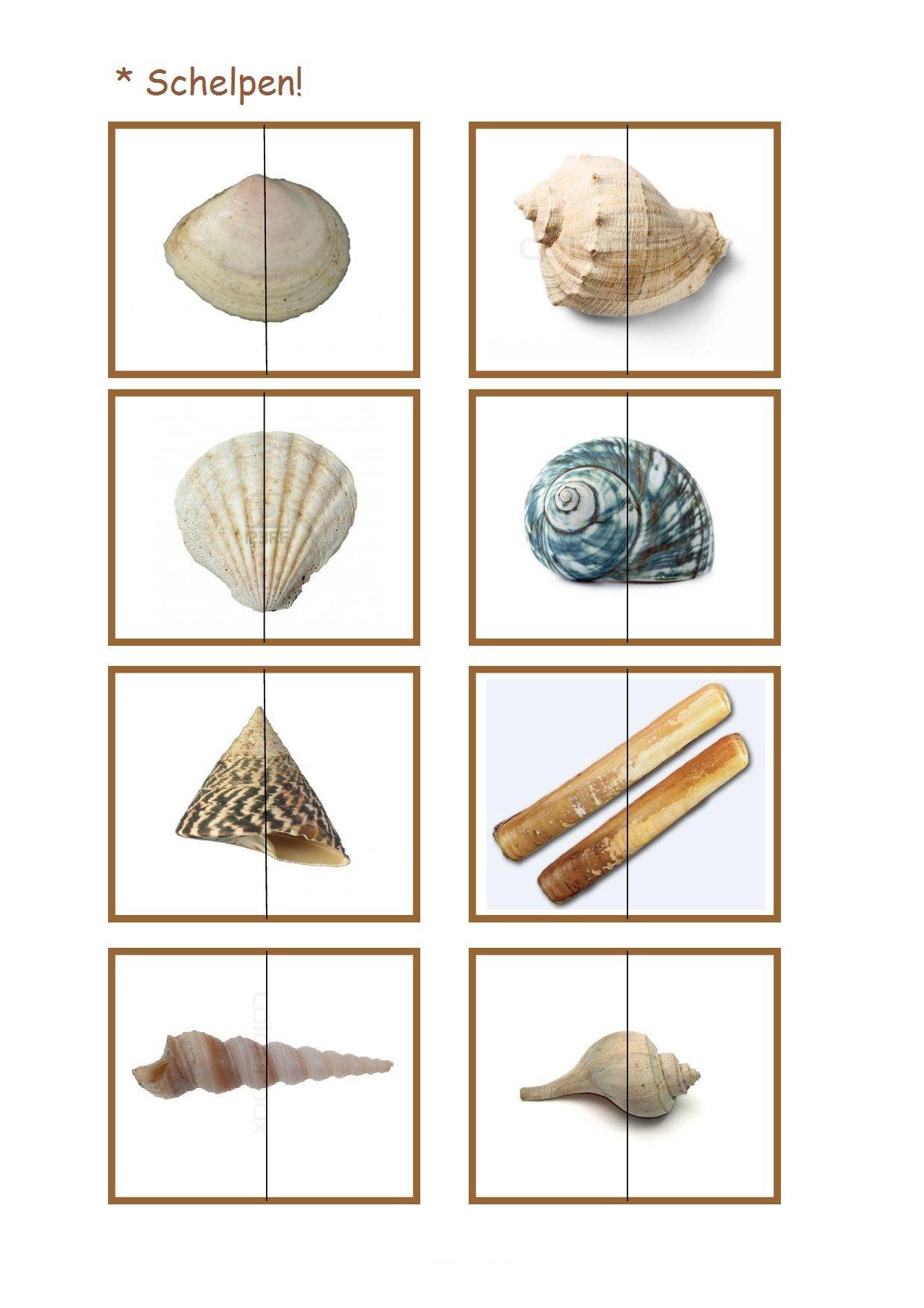 Schelpen Zee Lesideeen Pinterest