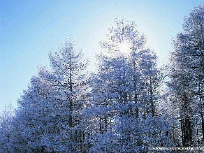 Winter Snow Wallpapers Winter Scene Wallpaper16 Wallcoo Net Winter Snow Wallpaper Winter Scenes Snow