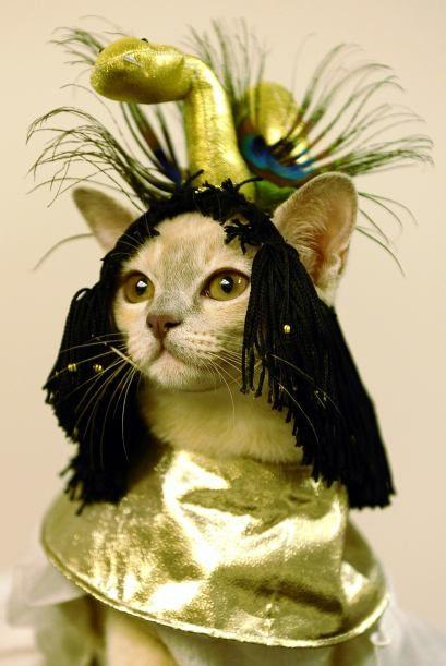 Animal & com | Cat Gatos and Animal