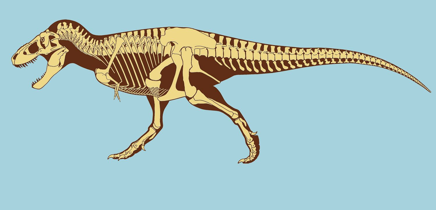 Tyrannosaurus rex facts about t rex king of the for Tyranosaurus rex