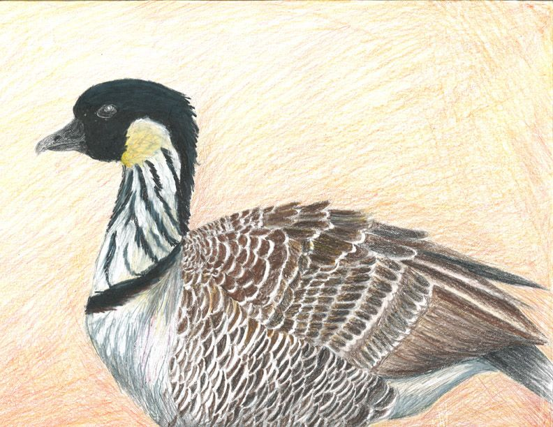 The 2013 Florida Junior Duck Stamp of Rebecca Nunez, 17, honorable mention in Group 4, grades 10-12. DDWS photo