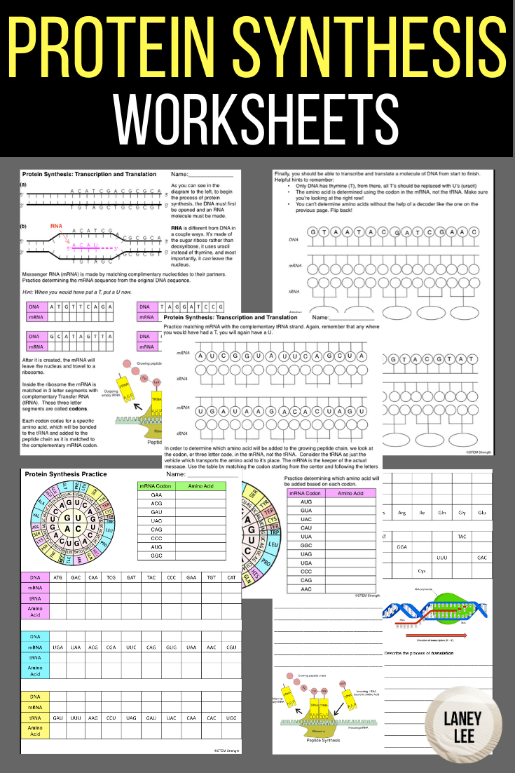 Protein Synthesis Worksheet with Answer Key in 2020