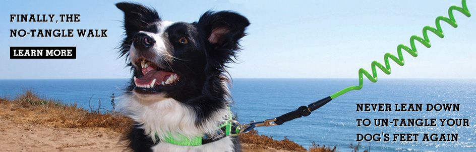 Taking The Pup To Beach Grab Best Leash There Is Our Coiled Surf Industry Inspired A Great For Sand Salt And Water
