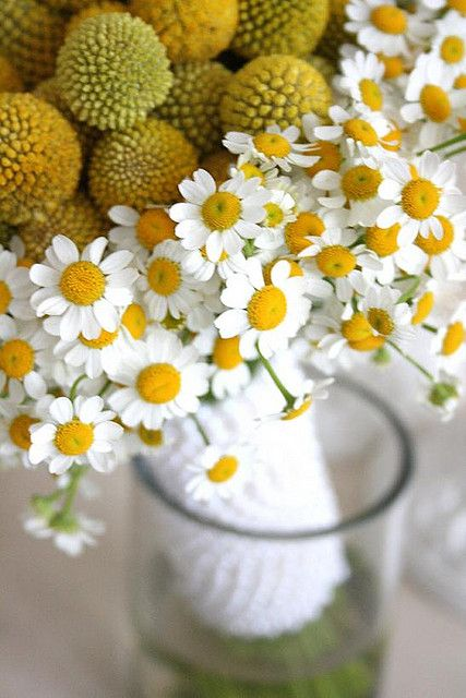 Billy Button Fever Few Bouquet 1 99 Billy Buttons Types Of Flowers Seeds For Sale