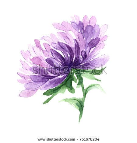 Stock Photo Wildflower Aster Flower In A Watercolor Style Isolated Full Name Of The Plant Aster Birth Flower Tattoos Aster Flower Tattoos Watercolor Flowers