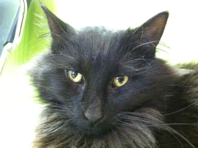 Pin On Black Cat