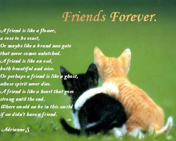 Poems Of Friend 5