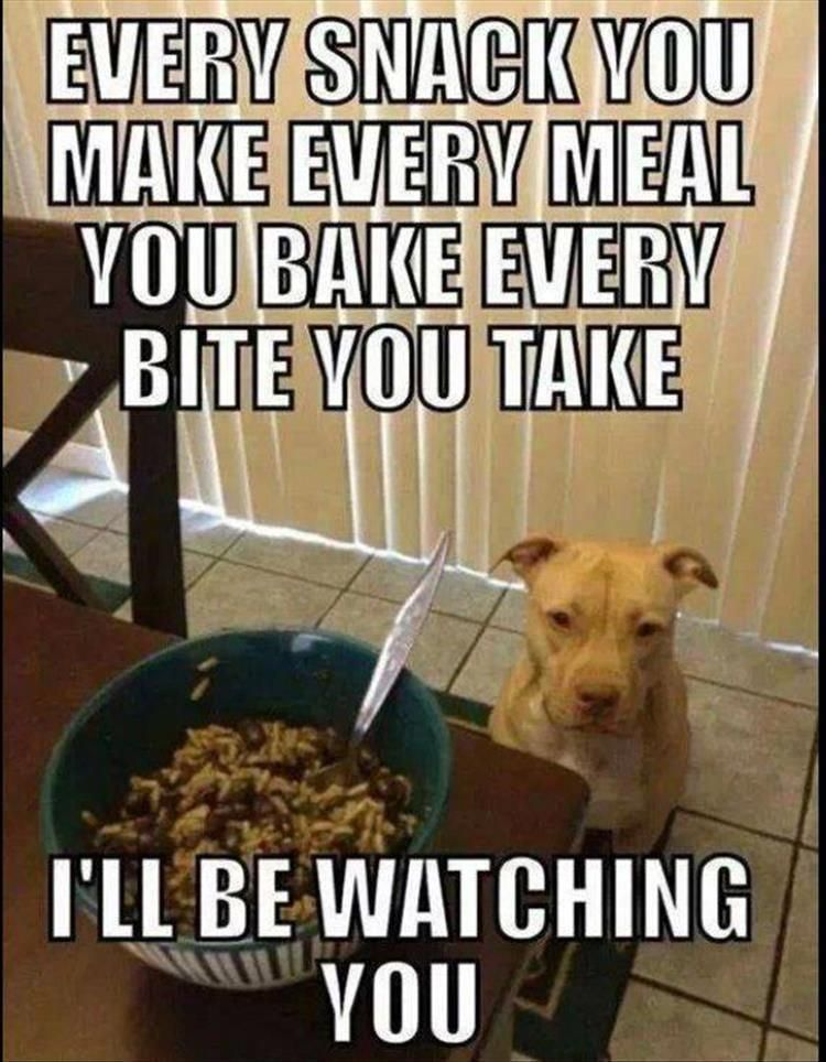 Funny Animal Pictures Of The Day - 11 Images #pitbullmemes | Pit