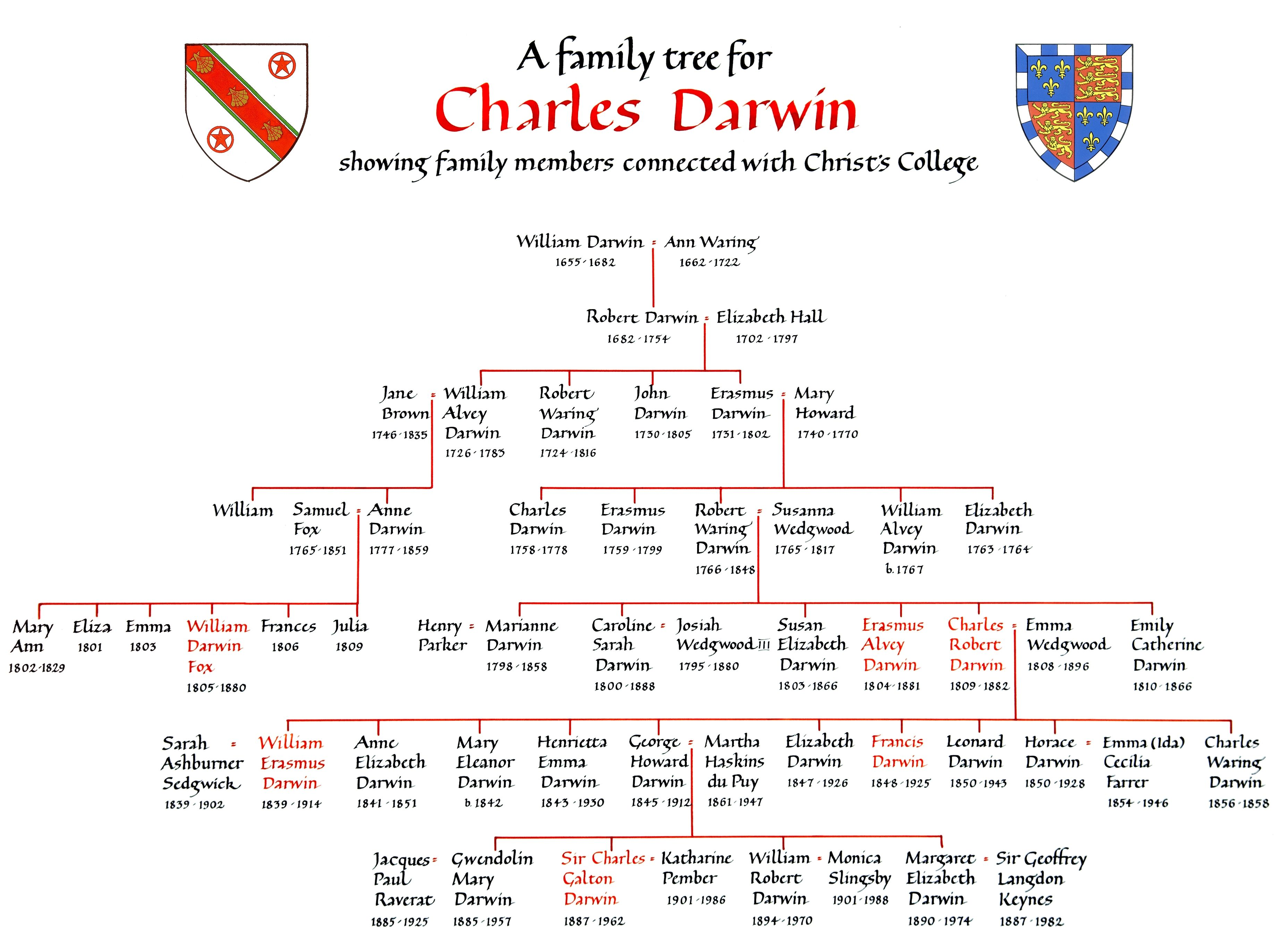 Darwin Family Tree Illustrated By P Price