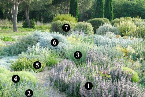 Plantas que soportan heladas y son resistentes a la sequía para