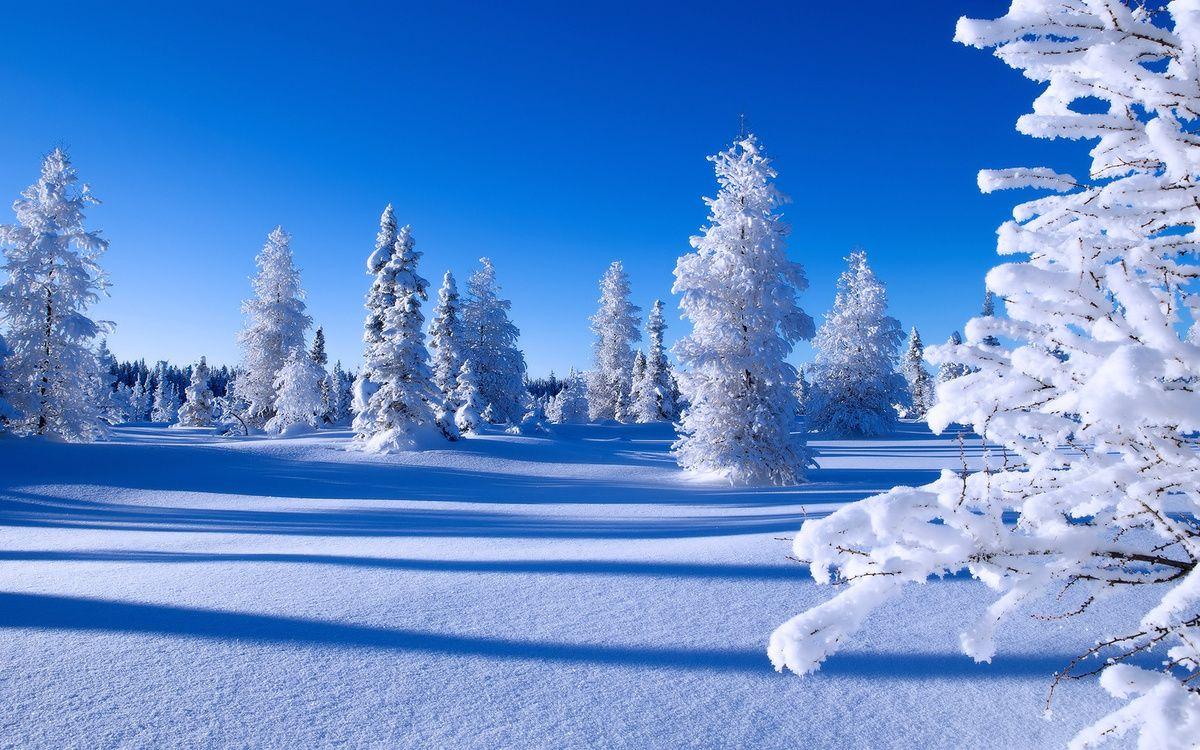 Лучшие картинки на тему зима