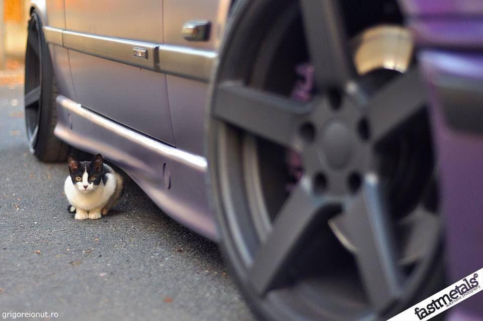 BMW E36 M3 Kitty