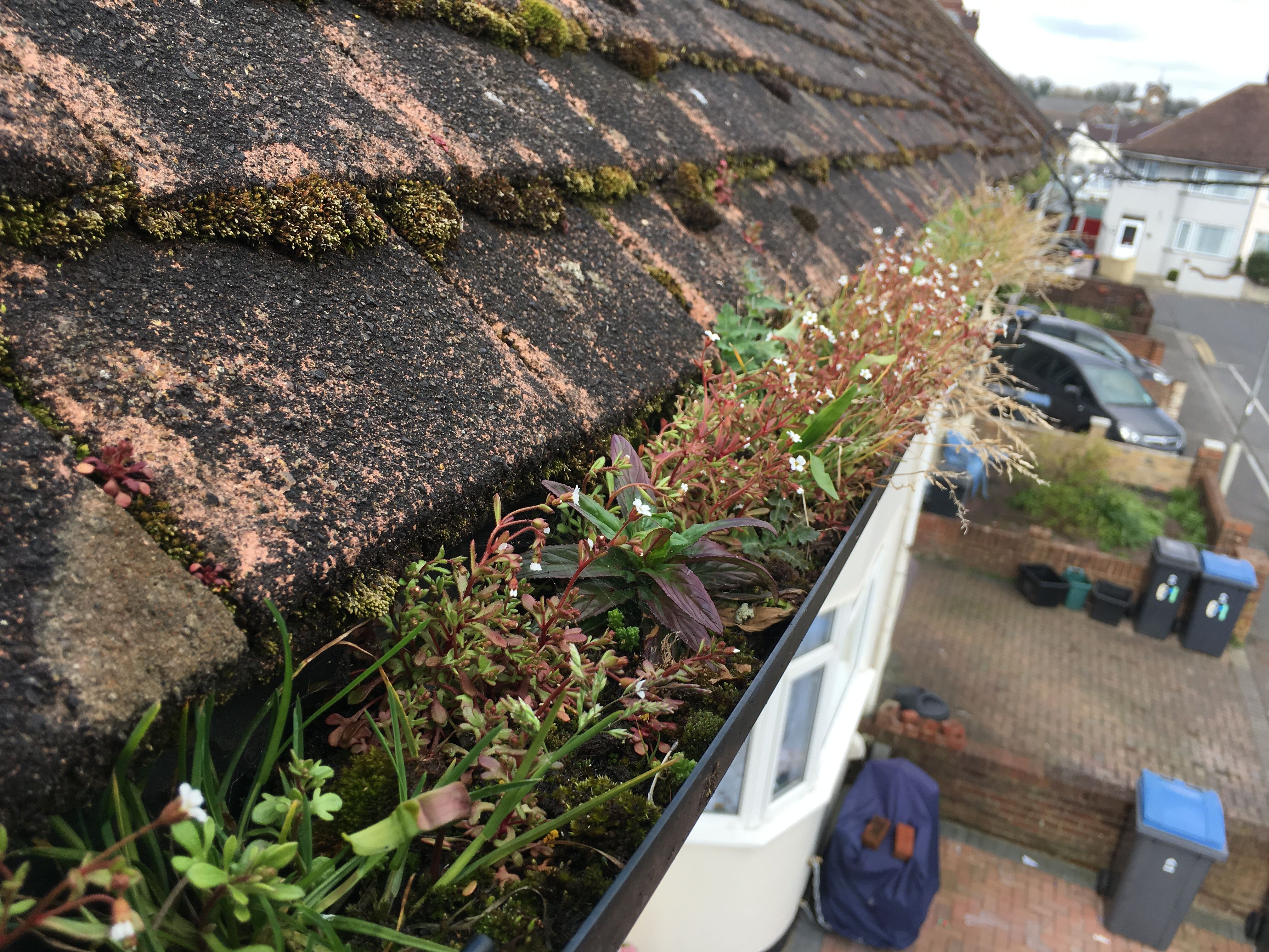 Roof cleaning service vancouver wa cleaning service
