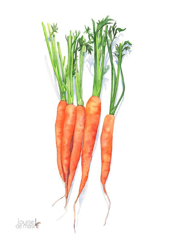 Carrots Print Carrot Print Carrots Watercolor 5 By By Louisedemasi