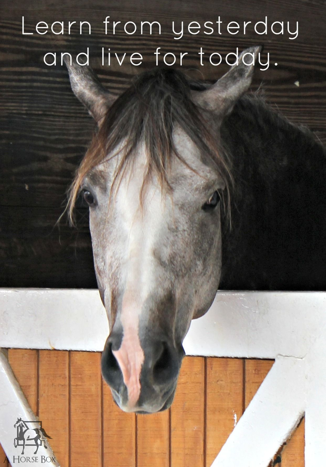Horse Horsequotes Horses Horse Quotes Funny Horses