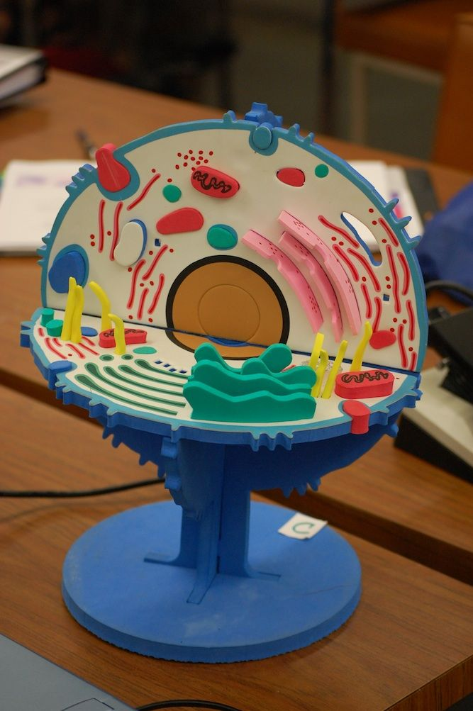 3d tonsil diagram cell model kit | kid stuff | cell model, plant cell model y animal cell project 3d cell diagram projects