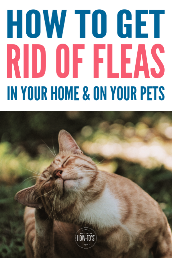 05f091142b39092187a6ee5935f8ef69 - How To Get Rid Of Fleas Organically In Your House