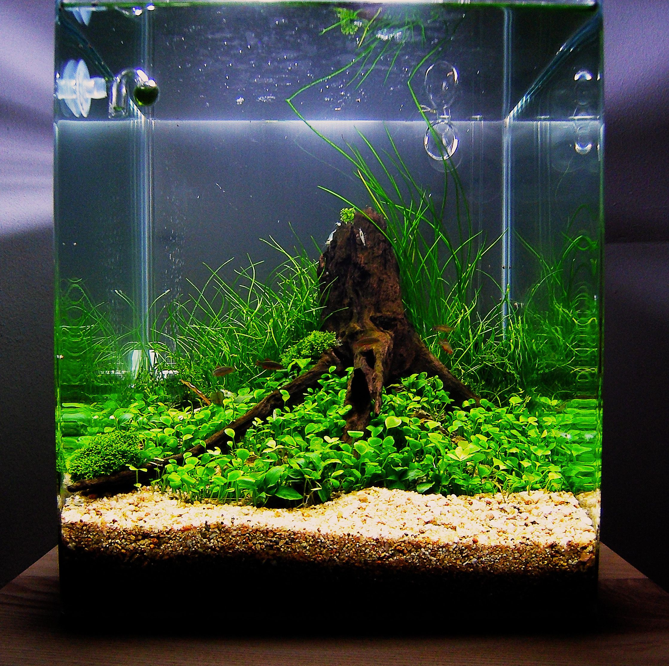 Fish for nano aquarium freshwater - This Tank Couldn T Even Be Called An Aquascape It Was