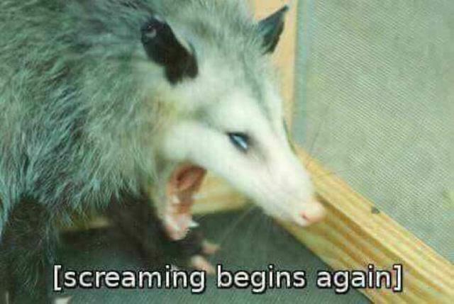 Reaction Pics Reaction Pictures Stupid Memes Opossum