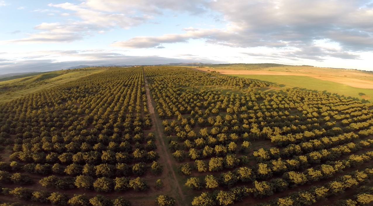 The UKWAZI macadamia orchard is located on the grounds of African ...