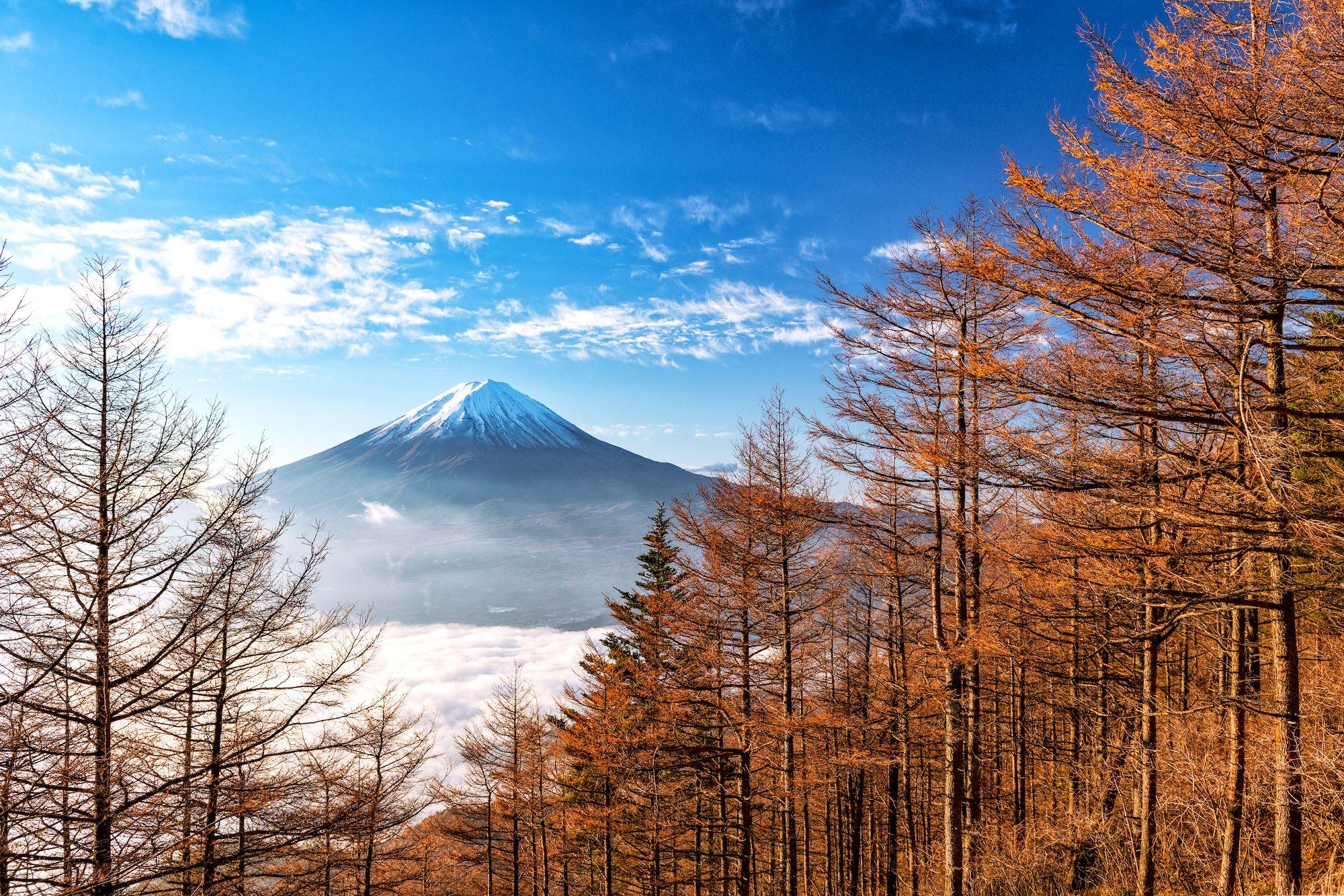 Today is the day of #MtFuji #富士山の日 . This photo taken by Naoya Yoshida . . . . . #PASHADELIC #絶景delic . #日本の絶景 #山梨 #yamanashi #新道峠 #seaofclouds . . #light_nikon #nikond850 #beautifulview #igers #ig_japan #instagood #instajapan #japan #japan_daytime_view #japantravel #japantrip #landscape #nature #natureshots #nature_shooters #naturephotography #photooftheday #photography #photo_jpn #photo_travelers