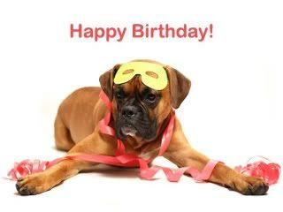 Boxer Dog Birthday Boxer Dogs Funny Boxer Love