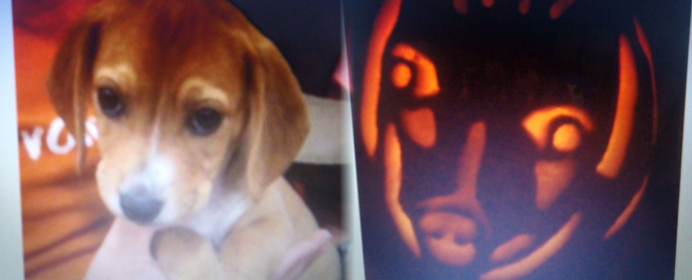 Pumpkin carving - puppy.