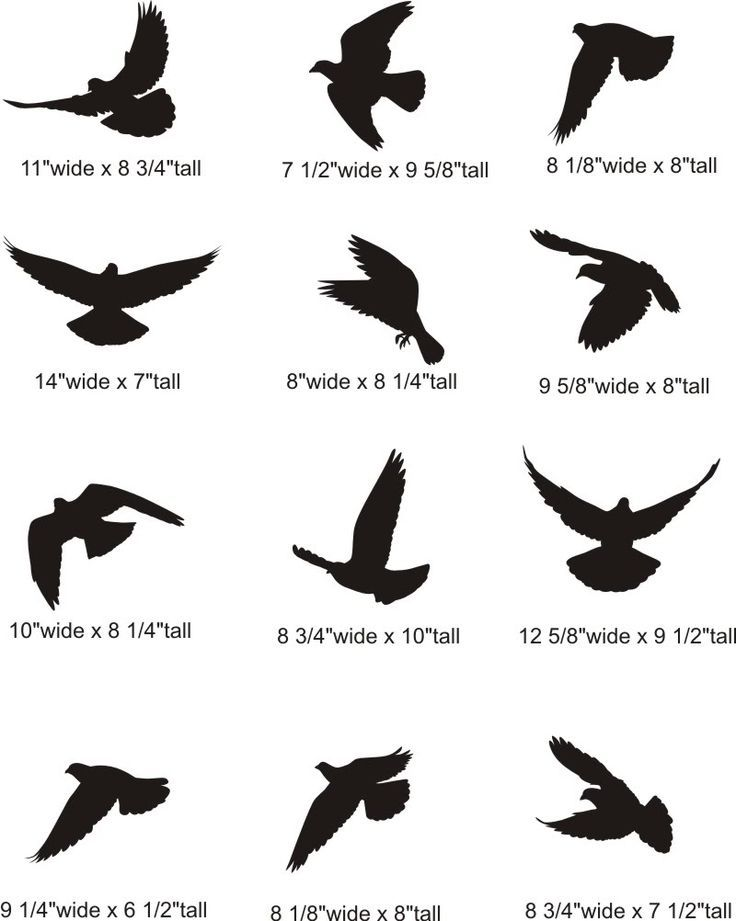 Bird Tattoo Designs In Impressive Ideas Birds 14 Black ... |Flying Birds Drawing Tattoo