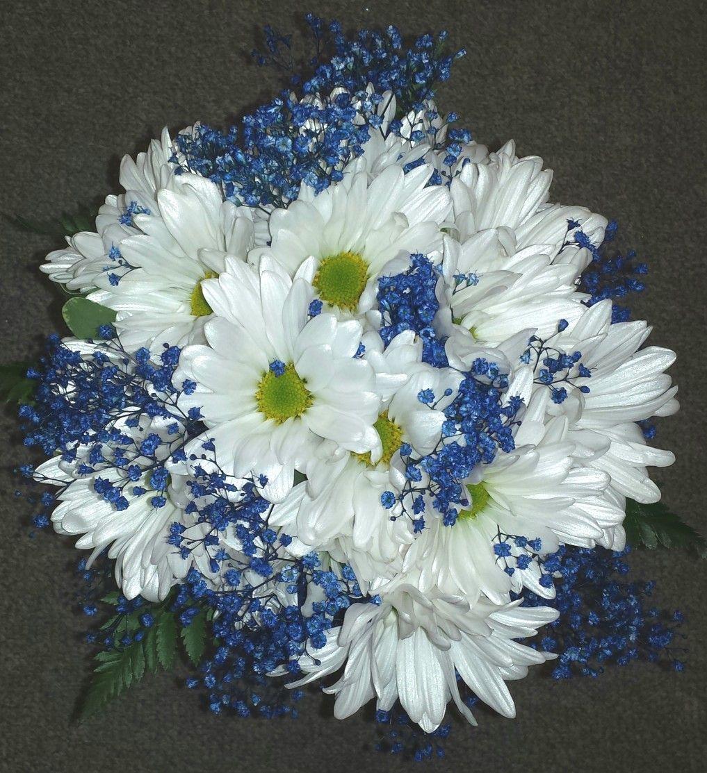 Hand tied bouquet white daisies blue babies breath
