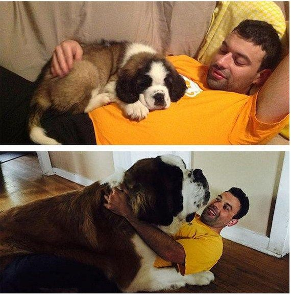 If you can Feel these pictures then you are a true dog lover - UrDogs
