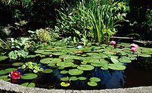 pond plants, waterlilies