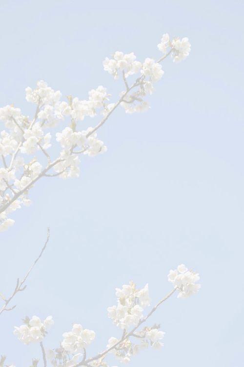 Imagem de flowers, blue, and sky Çiçek, Manzara, Instagram