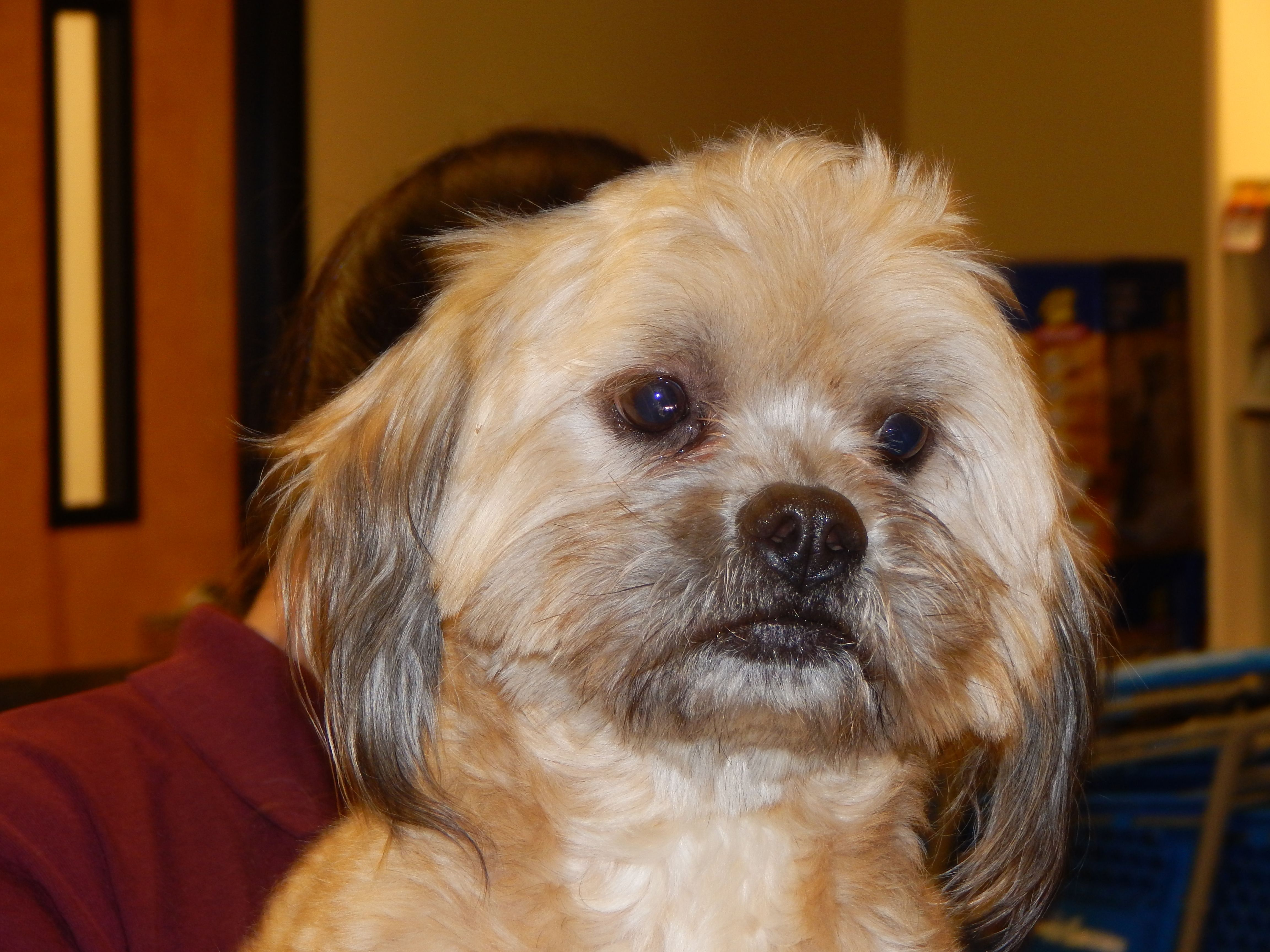 Stewart is a social, 2-year-old Shih Tzu mix that weighs 17 pounds. He gets along well with other dogs. Stewart came from a very high-kill shelter from the Central Valley. He is crate trained. Call at 243-6911. Go to www.petswithoutpartners.org.