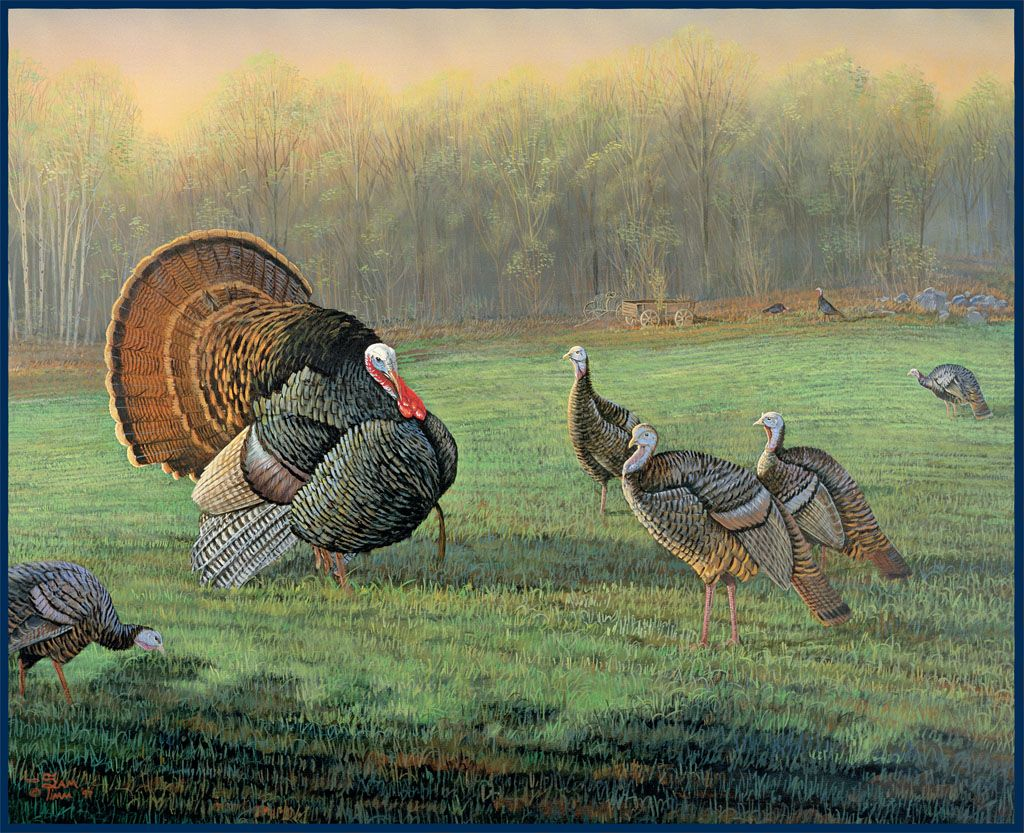 TURKEYS EATING IN THE WOODS WITH FAMILY Wallpaper Wall bordeR Decor TURKEY BIRD