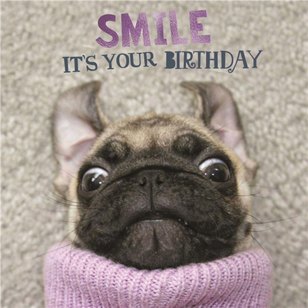 Outstanding Pug Dogs Detail Is Offered On Our Site Have A Look And You Wont Be Sorry You Did Birthday Greetings Funny Birthday Wishes Funny Happy Birthday Pug