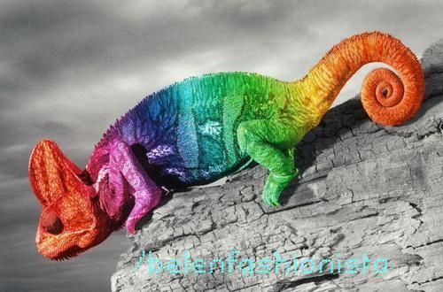 Colorful Pet Lizards I want this cha...