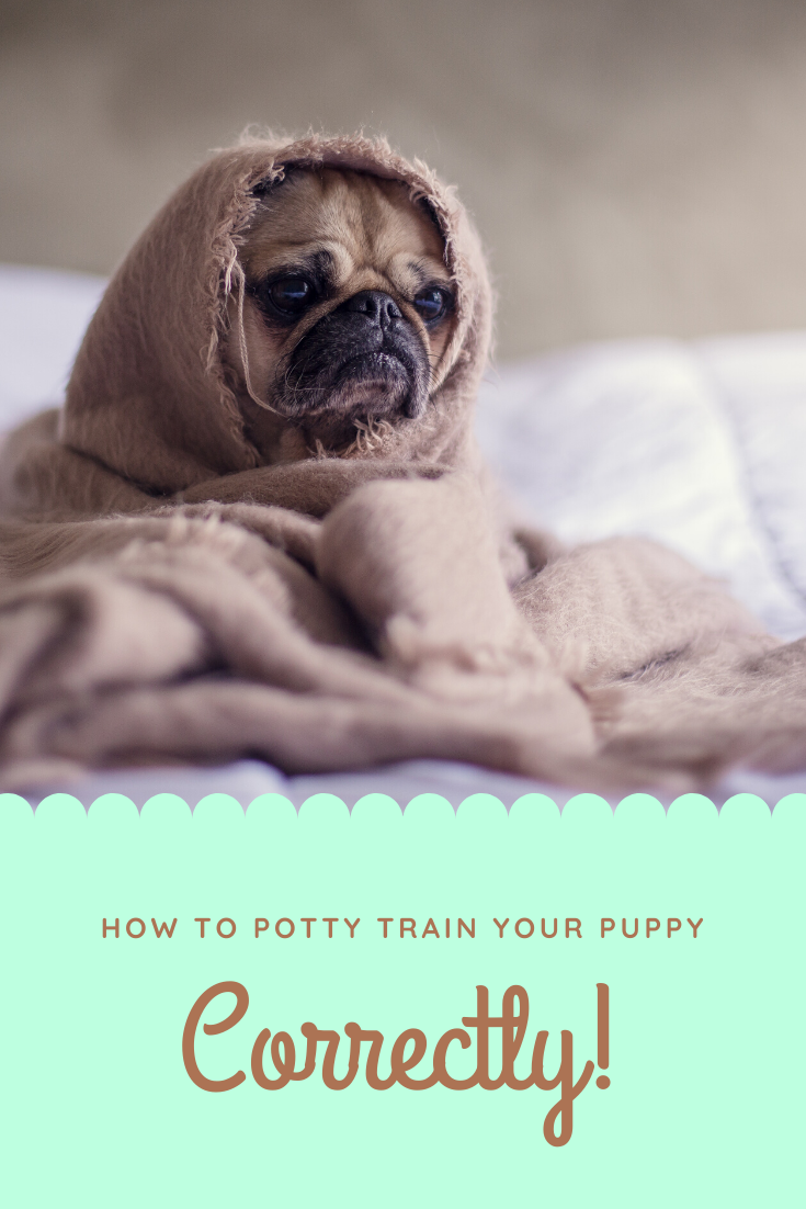 You Can Actually Develop Your Dogs Intelligence With This Special Dog Training Train Your Puppy Or Dog To Become More Intellige In 2020 Clever Dog Best Dog Food Dogs