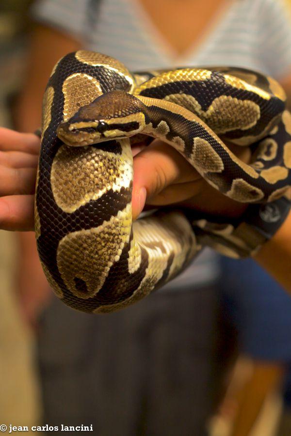 Panama Snake Sanctuary Snake Baby Animals Animals