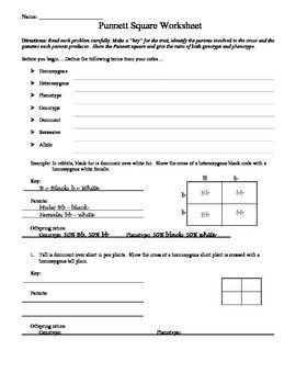 Printables Punnett Square Worksheet Answers punnett square worksheet answer key davezan davezan