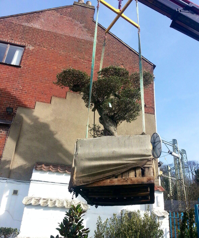 We deliver them all! Olive garden delivery, Olive trees