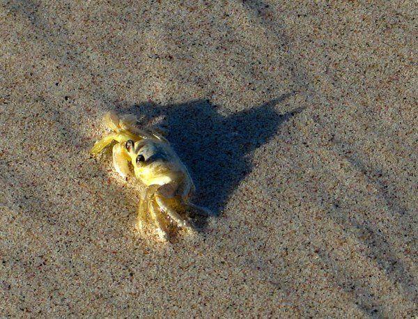 Crab is secretly Batman