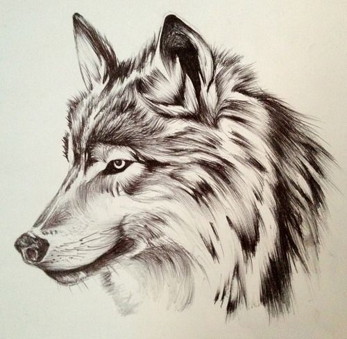 love this! pencil and ink | Amazing Art | Pinterest | Wolf ...