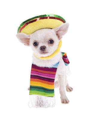 My Chihuahua Would Bite Me If I Dressed Her Like This Dog Care