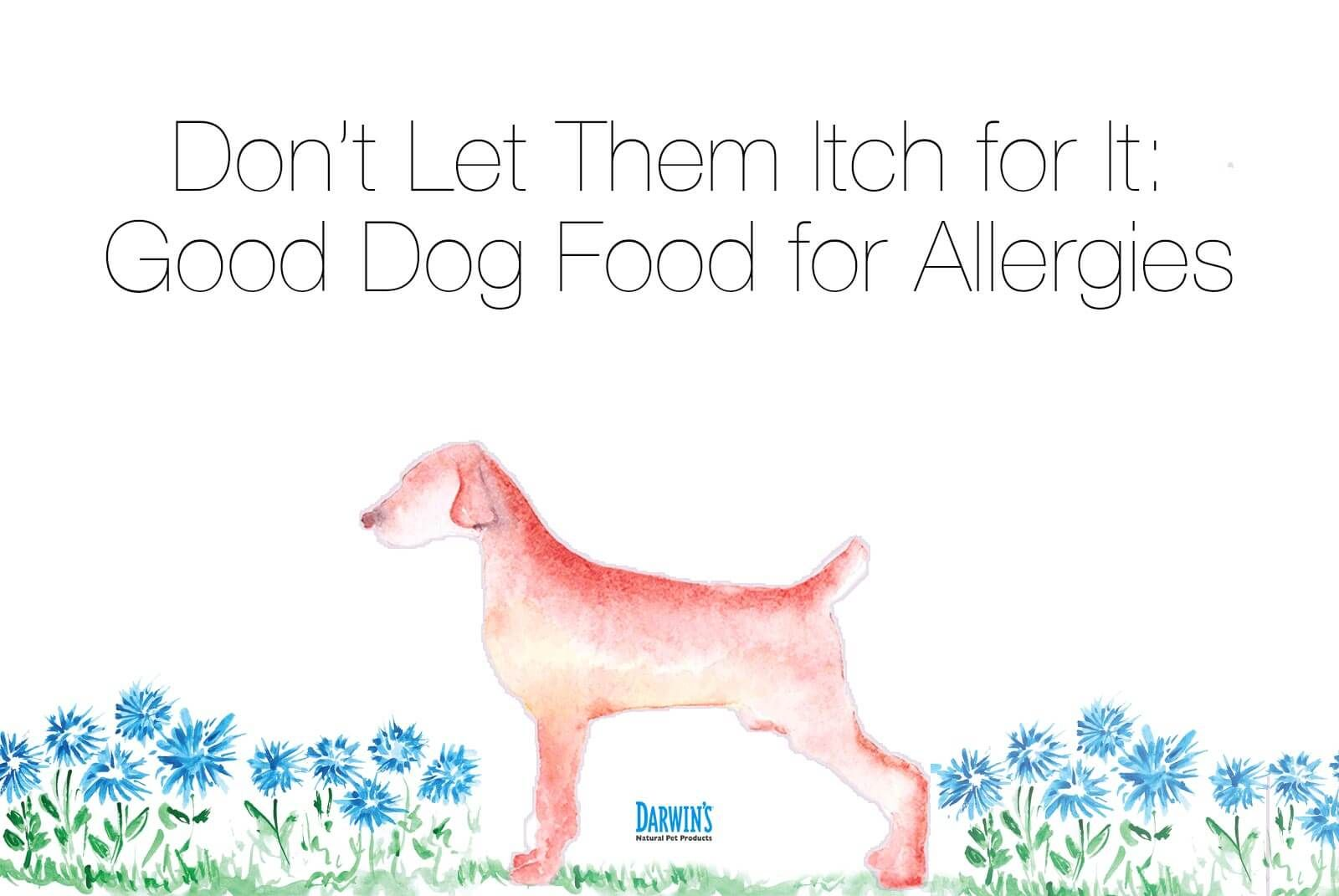 Dog Food For Allergies Raw Dog Food Pinterest Dog Food Recipes